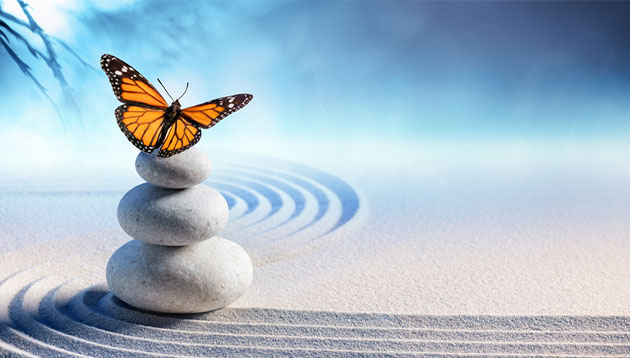 butterfly on the stones